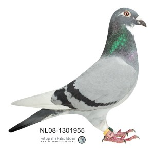NL08-1301955 (1 van 1)_4325